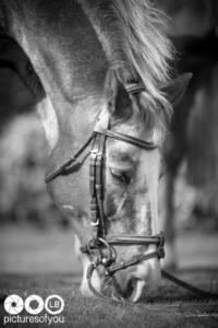 Clotilde et ses chevaux - Photos lifestyle par Laurent Bossaert - Pictures of You-12